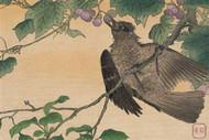 Bird Eating a Grape