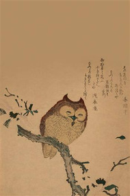 Owl of Branch