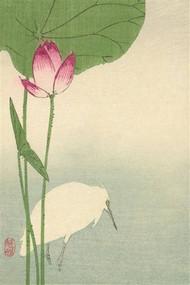 White Heron and Lotus