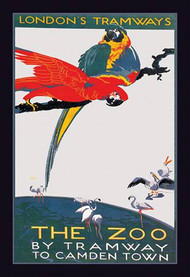 The London Zoo: The Macaw