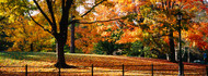 Trees in a Autumn Central Park
