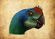 Oviraptor Head Detail