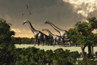 Brachiosaurus Dinosaurs Walk Through A Forested Area