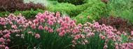 Flowering Plants Red Butte Garden Arboretum