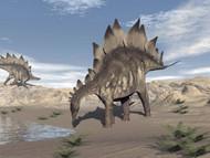 Stegosaurus Dinosaur Drinking Water In The Desert