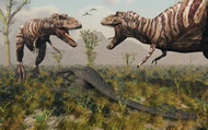 Confrontation Between A Pair Of T Rex Dinosaurs Over A Dead Sauropod I