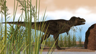 Tyrannosaurus Rex Hunting For Its Next Meal In The Grass