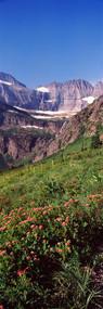 Alpine Wildflowers on a Landscape
