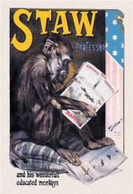Professor Staw His Wonderful Educated Monkeys