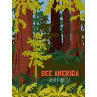 Muir Woods National Monument by Shayna Roosevelt