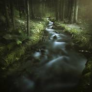 Small Stream In A Forest Pirin National Park Bansko Bulgaria