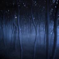 Dark Misty Forest Liselund Slotspark Denmark