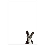 Boston Terrier Dog Pack 1