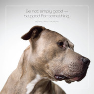 Pitbull Be Good for Something Card