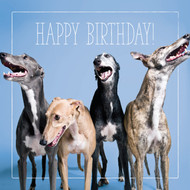 Greyhound Gang Happy Birthday Card