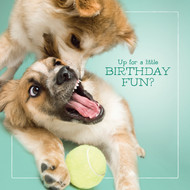 Bandit & Zorro's Birthday Fun Card