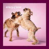 Brussels Griffon Love Card