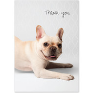 French Bulldog Boxed Thank You Notecards