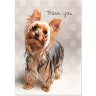 Yorkshire Terrier Boxed Thank You Notecards