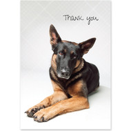 German Shepherd Boxed Thank You Notecards