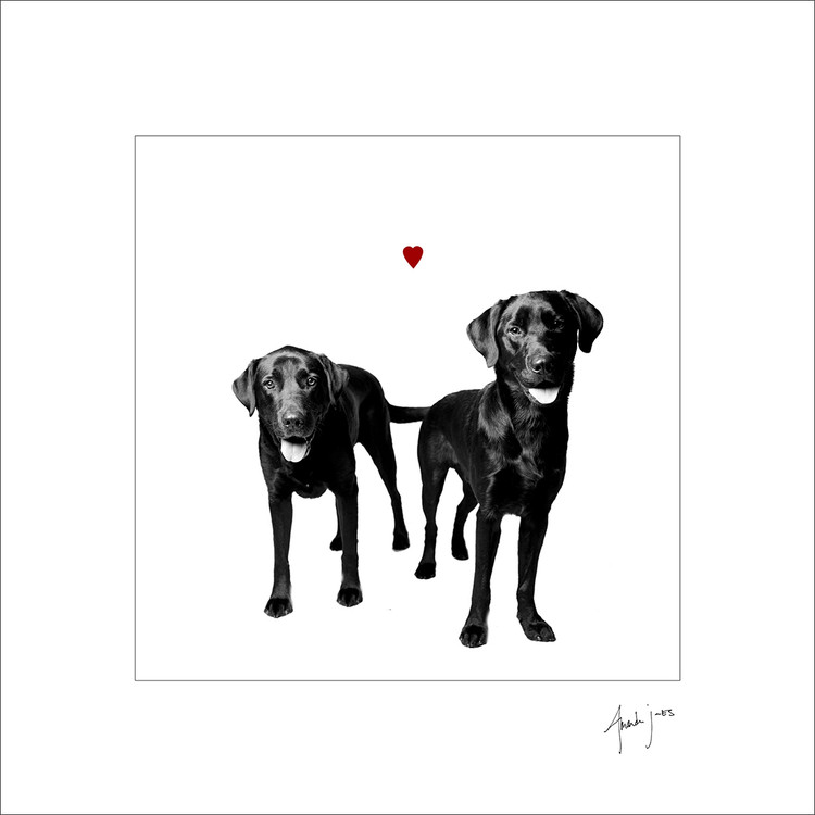 Black Labrador Retriever Love Dog Print. These two gorgeous black labs share their love with you in this gorgeous print!