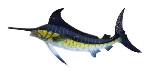 Large Marlin Fish Wall Mount Nautical Seasons