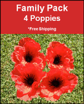 Poppy Park | Official Site | Family Pack | 4 Poppies