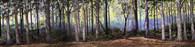 Hudson Allen Studios HA2103- Eastern Woodland Scene Backdrop No.2