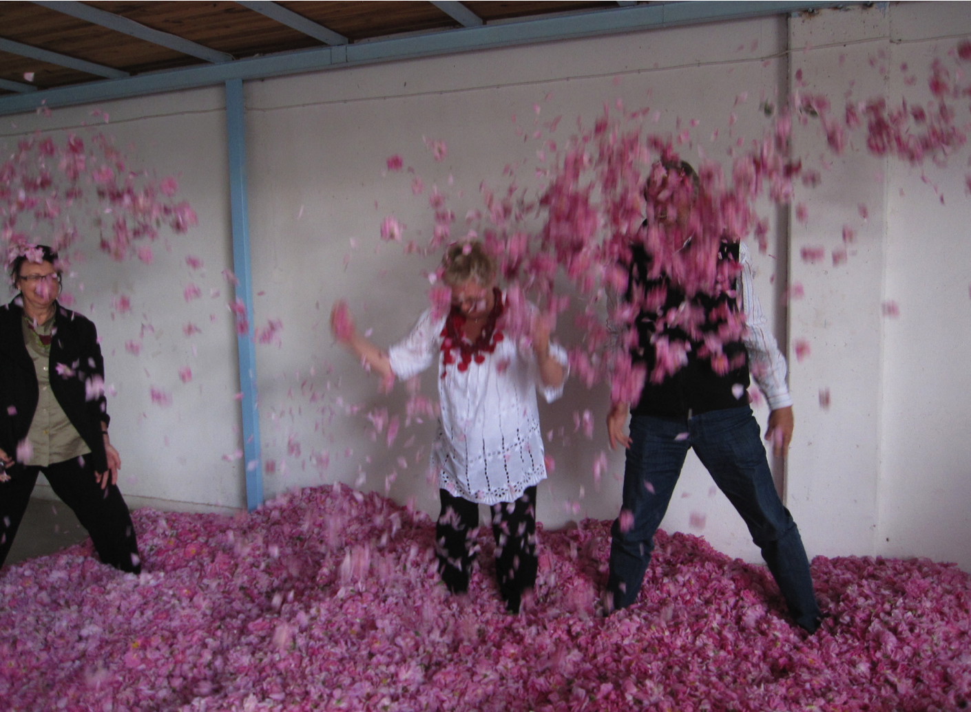 rose-harvest-play-petals.png