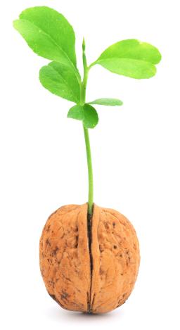 walnut-new-18146559xsmall.jpg
