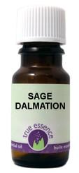 SAGE DALMATION (Salvia officinalis)