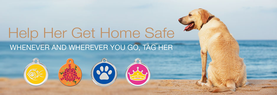 Dog ID Tags for Summer Safety