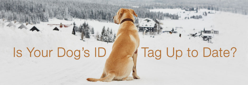 winter dog id tags
