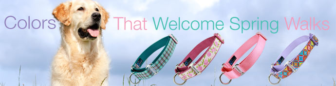 spring martingale dog collars
