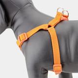 Orange Step In Dog harness, no-choke, adjustable, nylon
