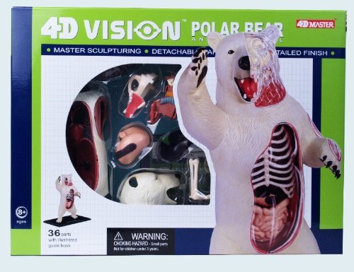 4D Vision Polar Bear Anatomy Model