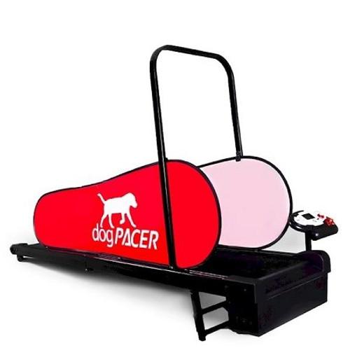 Domestic Pet Dog Pacer Mini Treadmill Interaction