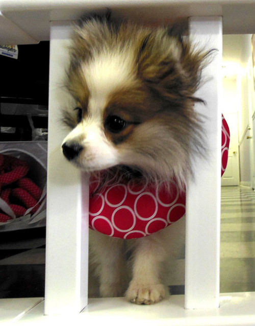 """Puppy Bumper - Keep Your Dog on the Safe Side of the Fence - Classic Pink - 10-13"""""""