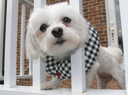 Puppy Bumpers Puppy Bumper Black and White Check 10 to 13""