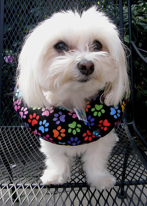 "Puppy Bumpers Puppy Bumper - Keep Your Dog on the Safe Side of the Fence - Rainbow Paw (up to 10"")"