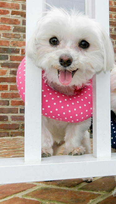 Puppy Bumper - Keep Your Dog on the Safe Side of the Fence - Pink Dots - up to 10""