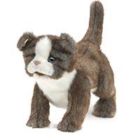 Folkmanis Scottish Fold Kitten Puppet