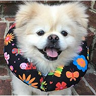 Puppy Bumpers No Way Out Dog Collar Padding