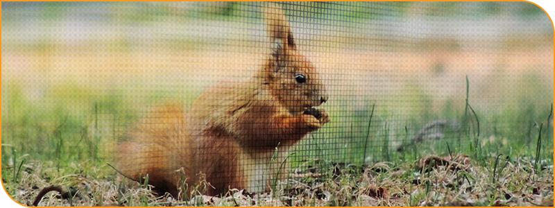 img-squirrel.jpg