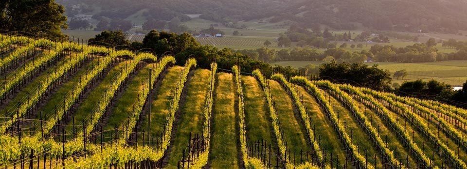 photo-vineyard-2.jpg