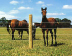 rsz-electric-horse-fence.jpg