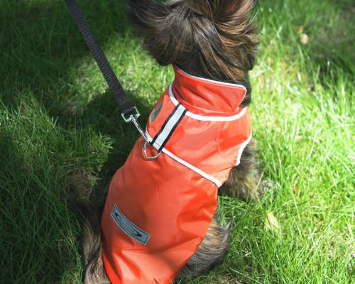 Best Waterproof Dog Harness