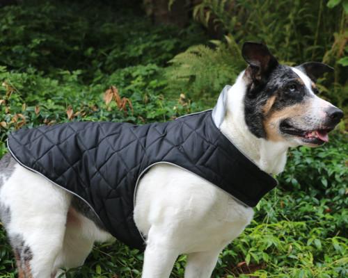 Highest Quality Waterproof Dog Coat