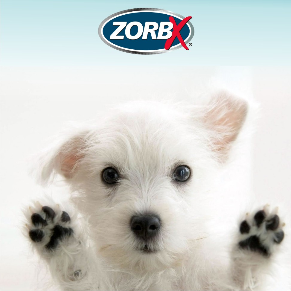puppy-odors.jpg