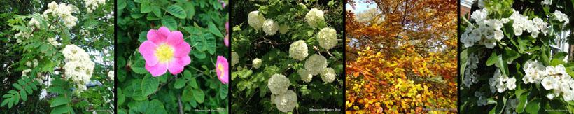 hedging-banner.jpg